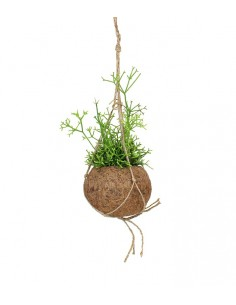Rhipsalis cassutha fibra in...