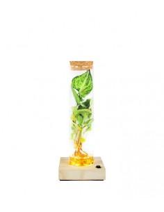 Singonio in vetro con led