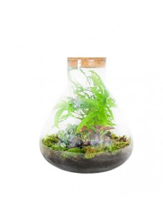 Terrarium in vetro con mix...
