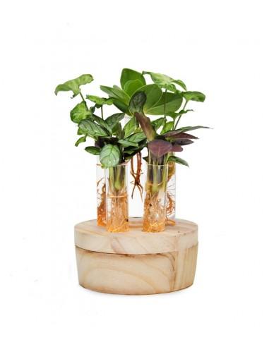Mix piante verdi in idroponica con led
