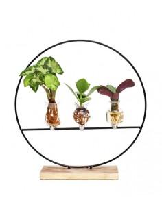 Piante verdi idroponica Mix