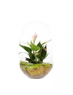 Anthurium in vetro eggs
