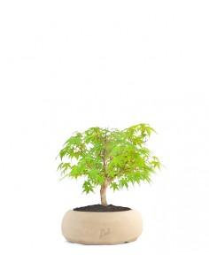 Acero Verde S