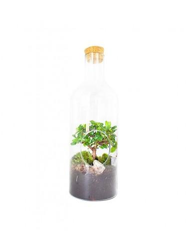 Carmona bonsai in terrarium