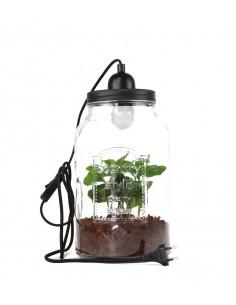 Lampada con pianta di caffè