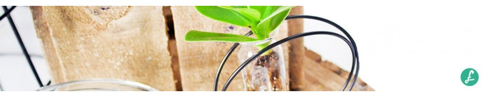 Plants in glass vase | wide assortment and prices