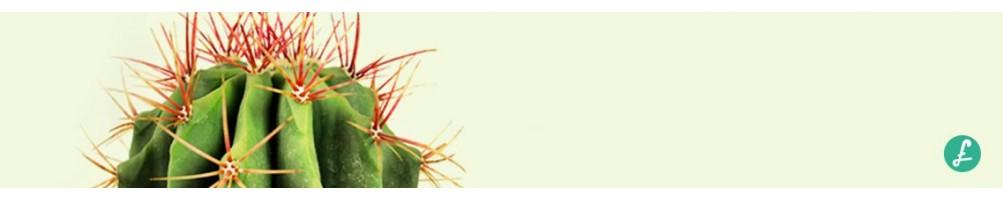 Piante grasse online vendita piante grasse rari e comuni for Vendita piante grasse on line