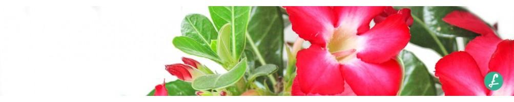 Piante da esterno! Acquista online la tua pianta da esterno!