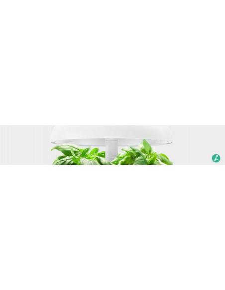 Capsule PLANTUI