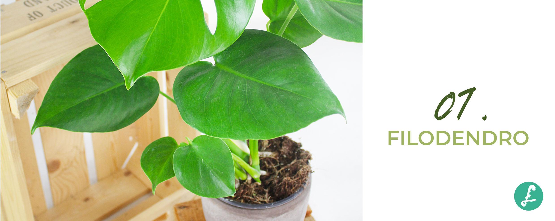 Piante Rampicanti Da Interno piante da salotto: le 10 piante per arredare il tuo salotto