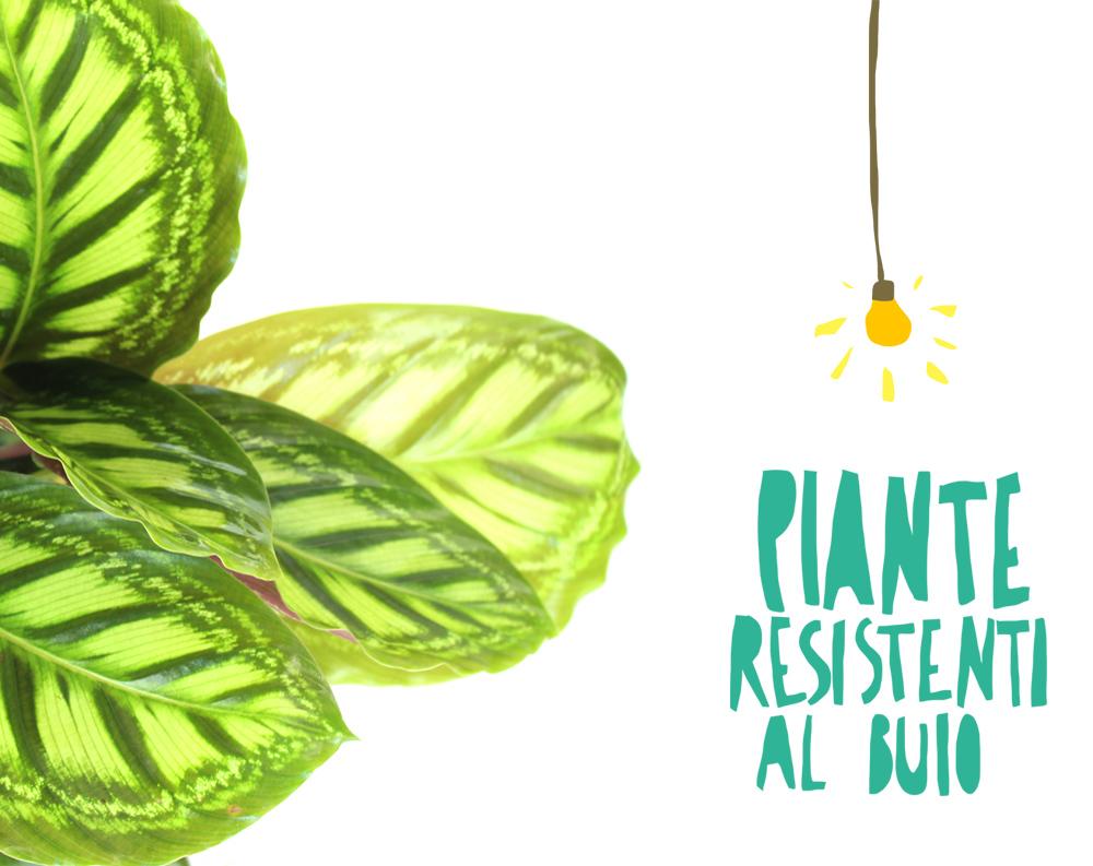 Tronchetto Della Felicità Da Esterno possono le piante da appartamento vivere con poca luce? si