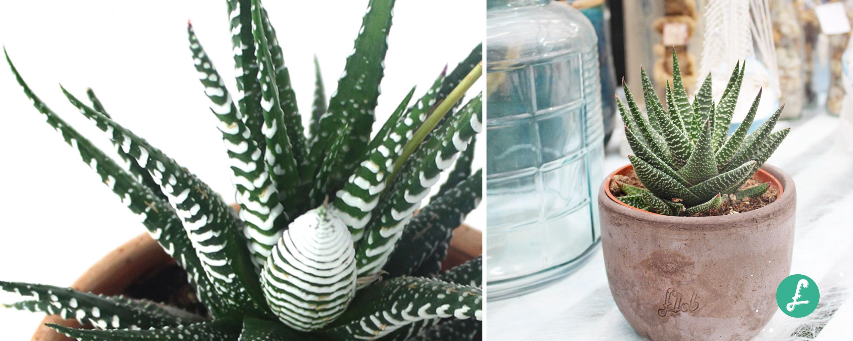 Piante Strane Da Appartamento top 5 delle migliori piante grasse con fiori - blog flob