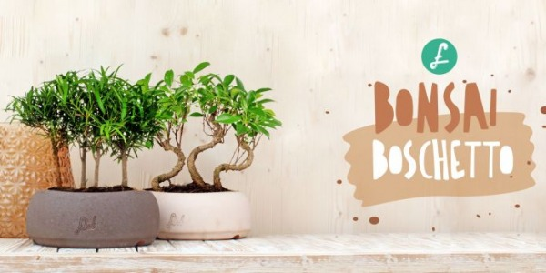 Bonsai boschetto: un bosco in miniatura a casa tua